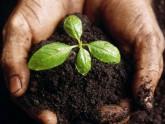 klijanje -biljka u dlanu